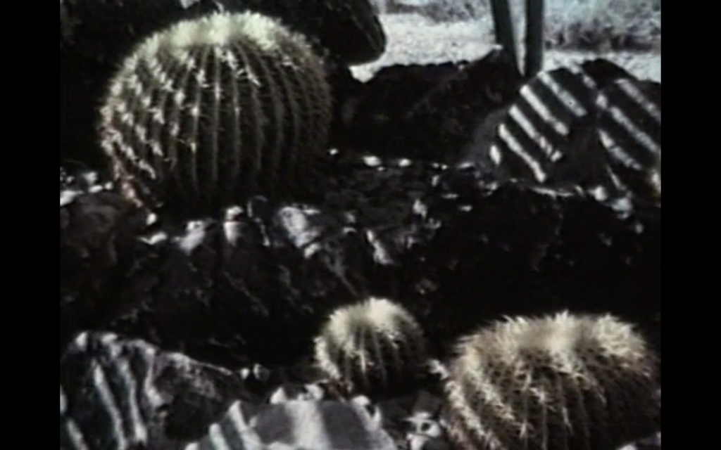 The image is a colour screenshot from the film Travels with Tove. It shows a range of large and small spherical cacti and irregularly shaped boulders and rocks. There is some desert and scrub bushes in the background, as well as a pair of human legs. The rocks and cacti in the foreground are striped with light and shadow, making a striking geometric composition.
